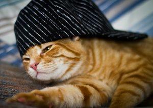 Fantastic Feline Quirks | Lawndale Veterinary Hospital